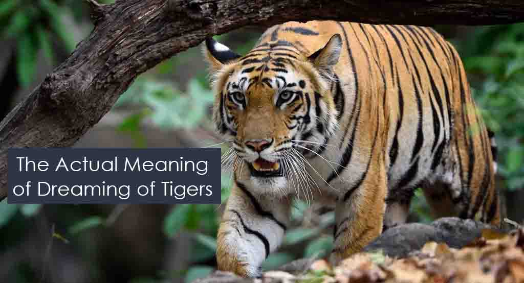 Meaning of Dreaming of Tigers